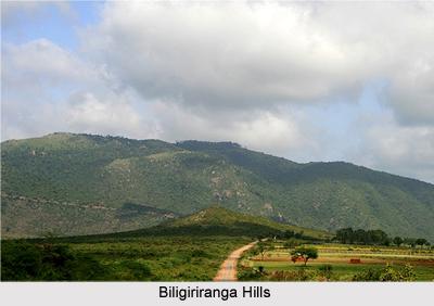 Biligiri Hills, Mysore, Karnataka