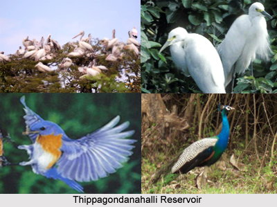 Bird Watching in Karnataka