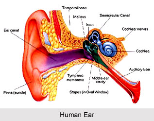 Yoga for Ear Problems, Yoga and Health