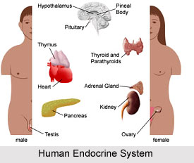 Impact of Yoga On Endocrine System