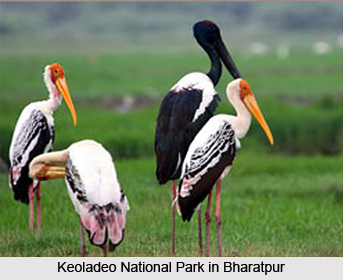 Travel Information in Bharatpur, Rajasthan