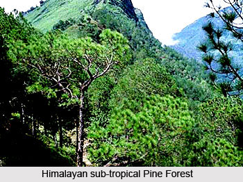 Forests of Chamoli District