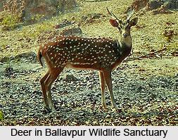 Ballavpur Wildlife Sanctuary, West Bengal