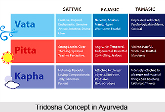 Physiology of Ayurveda