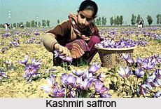 Economy of Jammu & Kashmir