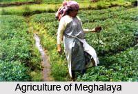 Economy of Meghalaya