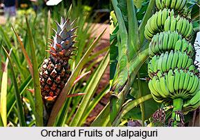 Economy of Jalpaiguri