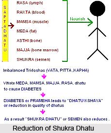 Shukra Dhatu