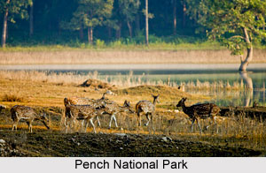 Pench River, Indian River