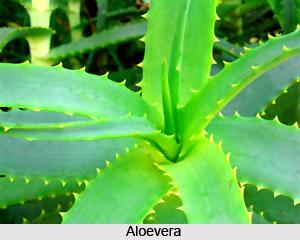 Bitter Taste in Ayurveda