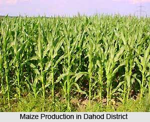 Economy of Dahod District