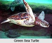 Gahirmatha Marine Wild life Sanctuary