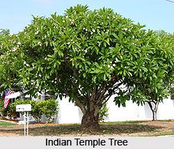 name of trees in hindi language The list is divided into different sections based on their type : trees/vruksh, fruit trees/falzad, flowering plants/fulzad, others trees/vruksh scientific name.