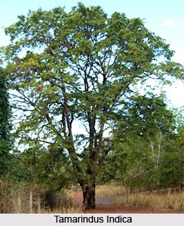 Flora of Ranthambore Tiger Reserve
