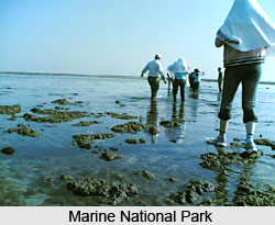 Marine National Park