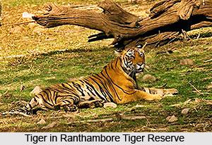 History of Ranthambore Tiger Reserve