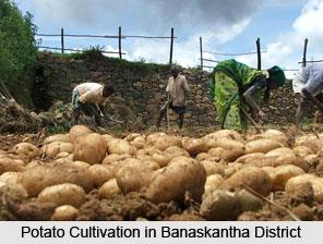 Economy of Banaskantha District