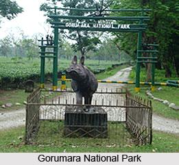 Gorumara National Park, West Bengal