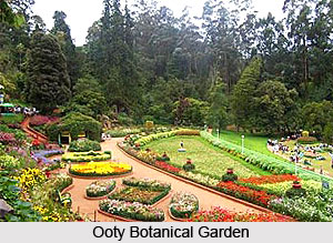 Government Botanical Gardens, Udagamandalam, Tamil Nadu