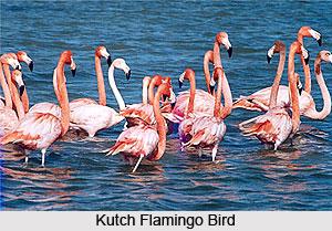 Kutch Wildlife Santuary