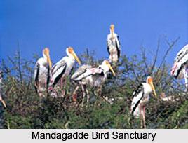 Mandagadde Bird Sanctuary , Karnataka