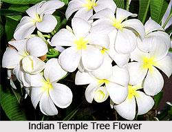 Indian temple tree mightylinksfo