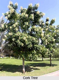 Cork Tree, Indian Trees