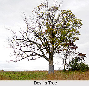Devil's Tree, Indian Trees