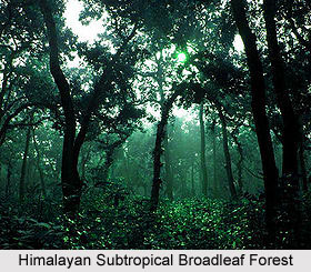 Forests in Northern India