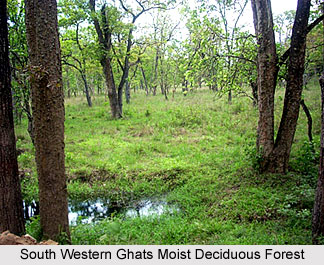 Forests in Southern India