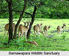 Barnawapara Wildlife Sanctuary, Chhattisgarh