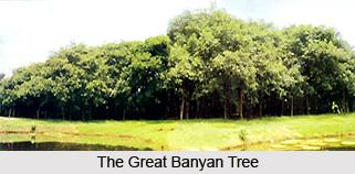 The Great Banyan Tree, Howrah District