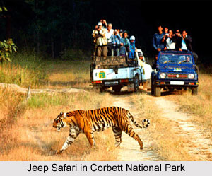 Zoological Survey of India