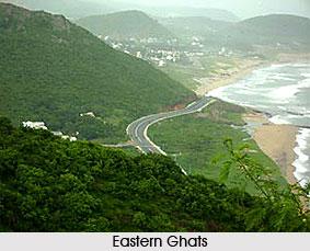 Semi-Evergreen Forests  in Orissa
