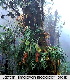 Himalayan Subtropical Broadleaf Forests in India