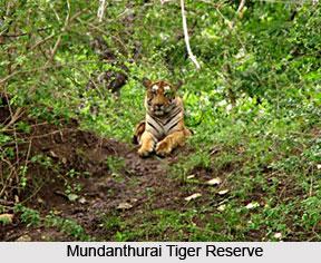 Mundanthurai Tiger Reserve, Tamil Nadu