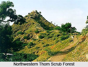 Northwestern Thorn Scrub Forests in India