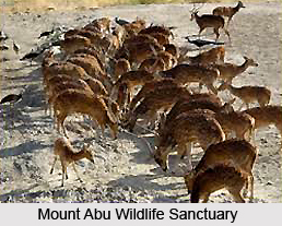 Places of Interests in Mount Abu