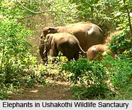 Ushakothi Wildlife Sanctaury, Sambalpur,  Orissa