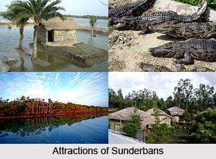 Sunderbans, West Bengal