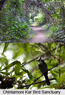 Chintamani Kar Bird Sanctuary, West Bengal