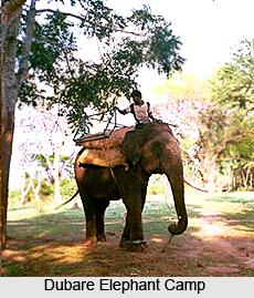 Dubare Elephant Camp, Karnataka