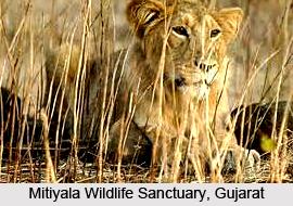 Mitiyala Wildlife Sanctuary, Mitiyala, Gujarat