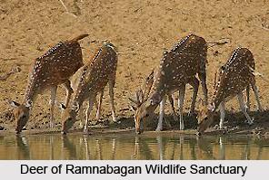 Ramnabagan Wildlife Sanctuary, West Bengal
