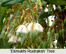 Rudraksha Therapy