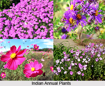 Indian Annual Plants