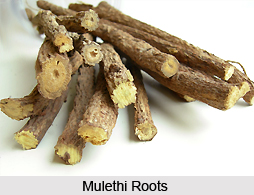Liquorice-Mulethi, Indian Herb