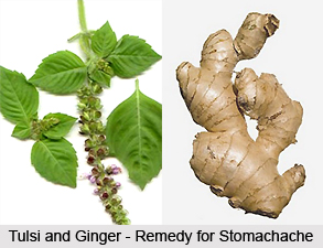 Diseases of the digestive system cured by Tulsi
