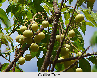Golika, Indian Medicinal Plant