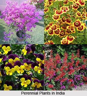 Perennial Plants in India